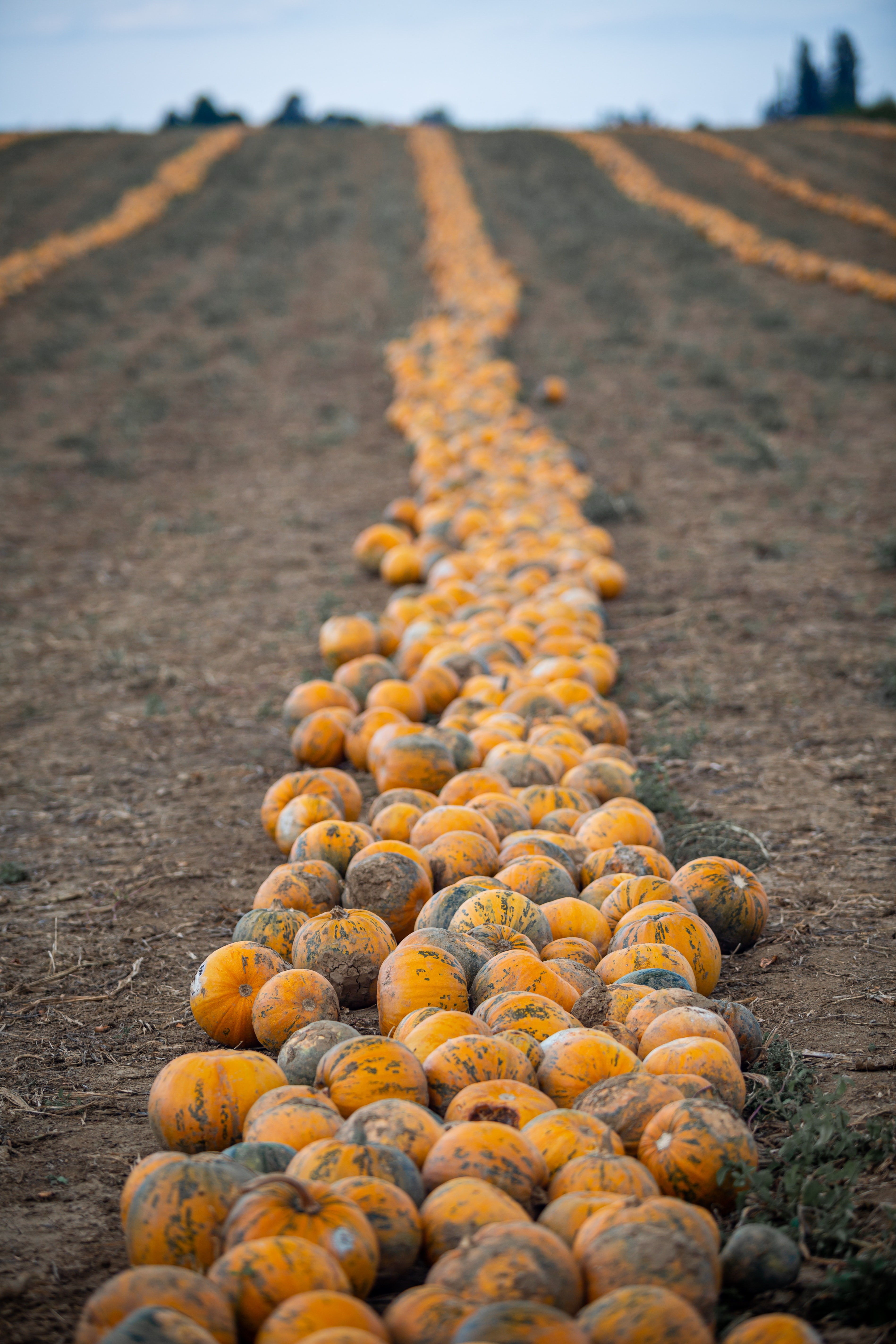 Reduce pumpkin waste tips