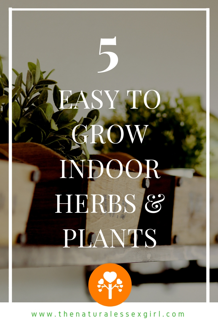 5 Easy to Grow Indoor Herbs & Plants with The Natural Essex Girl