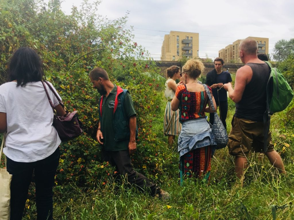 Wild Food Walk UK