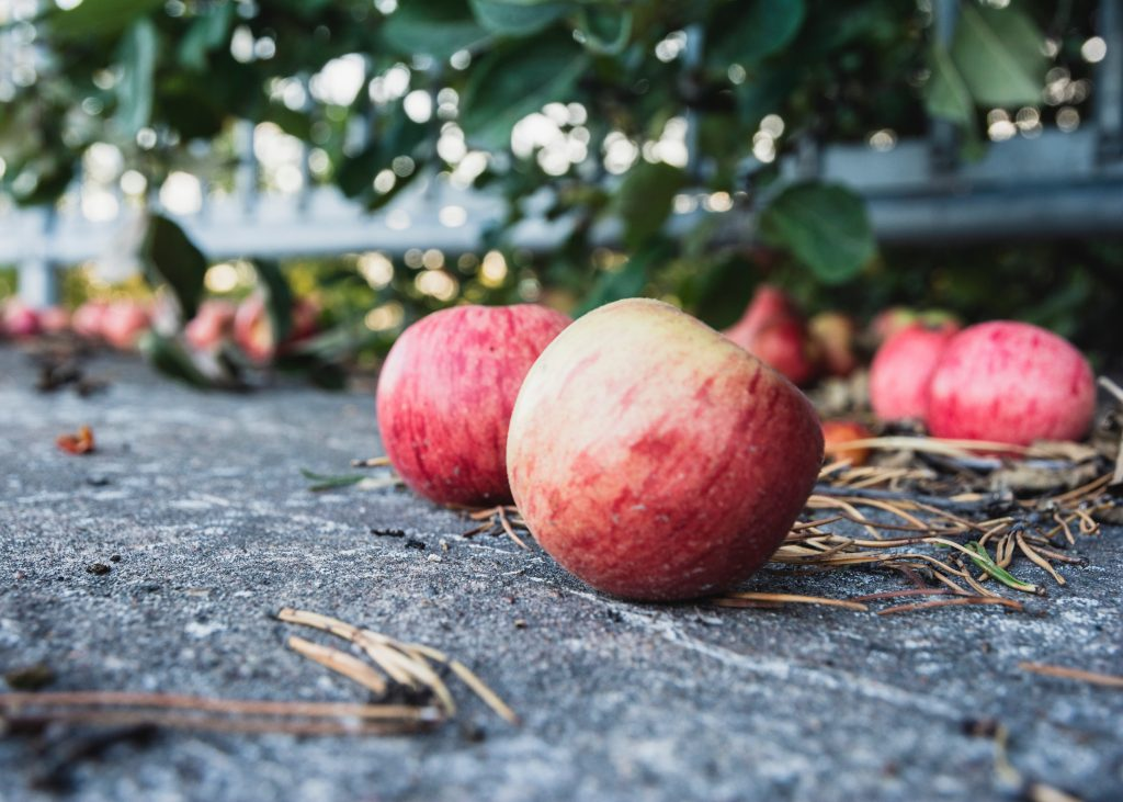 Wild Apples by Fanny Gustafsson Unsplash