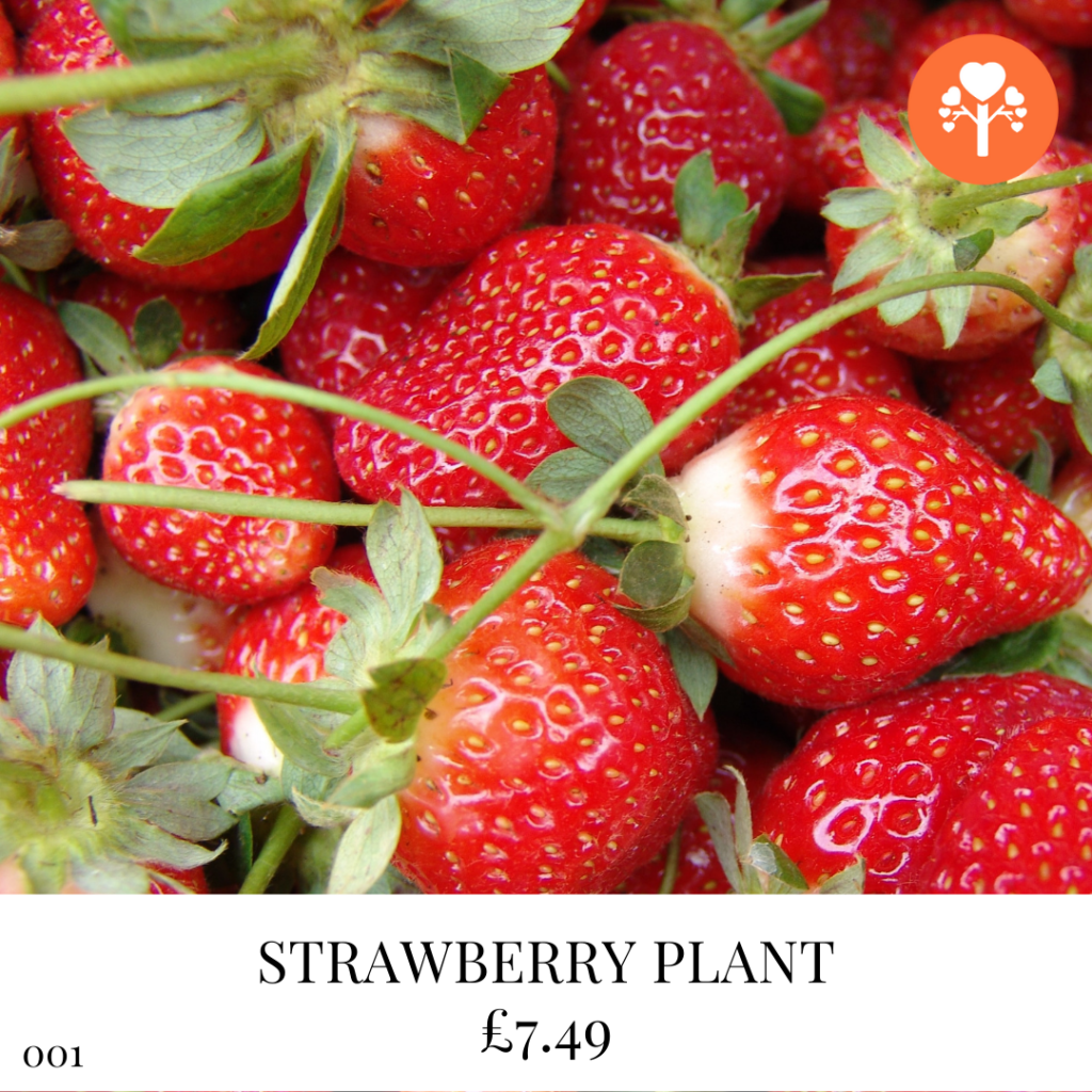 Grow Your Own Strawberries in 2022